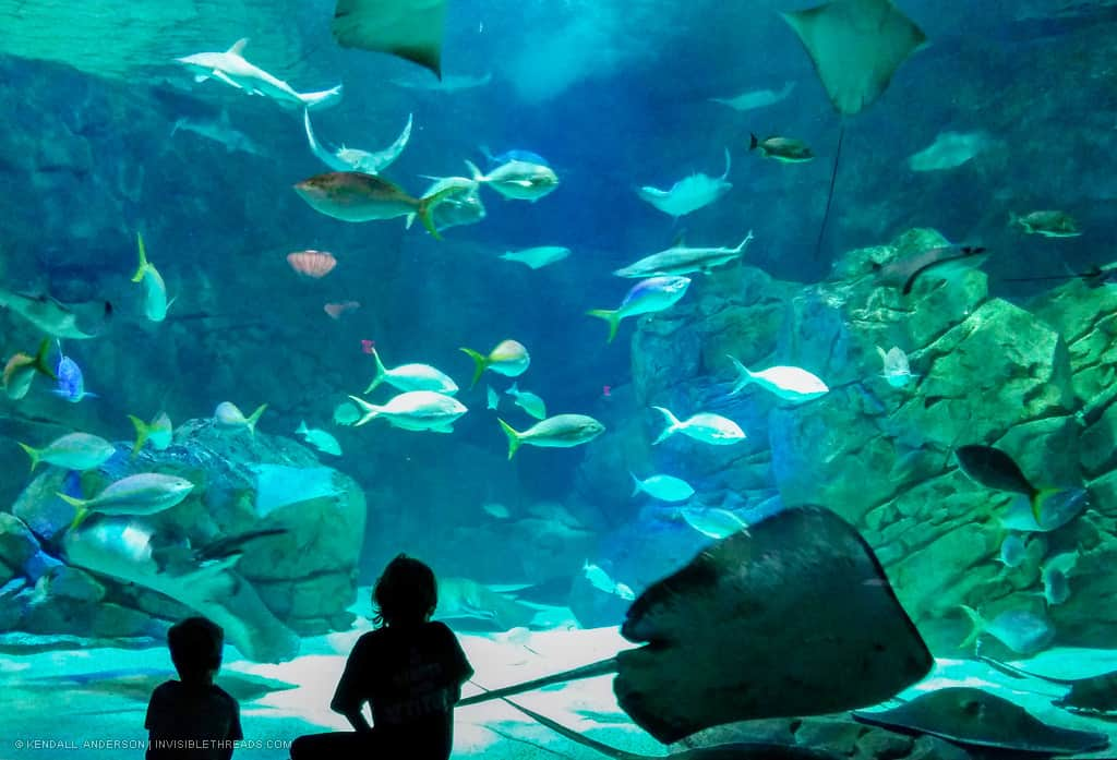 The silhouette of two children is in front of a large aquarium tank. Inside the tank, stingrays and other large fish swim around.